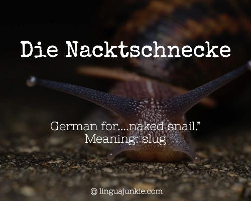 Die Nacktschnecke