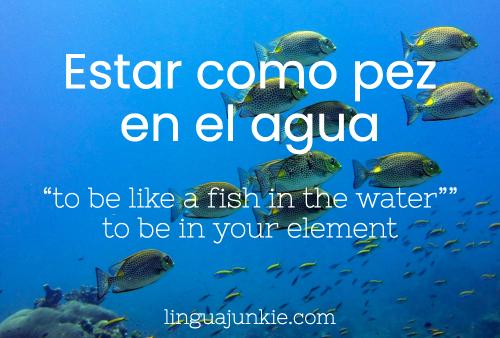 Estar como pez en el agua